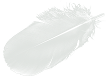 SUPER LIGHT FEATHER